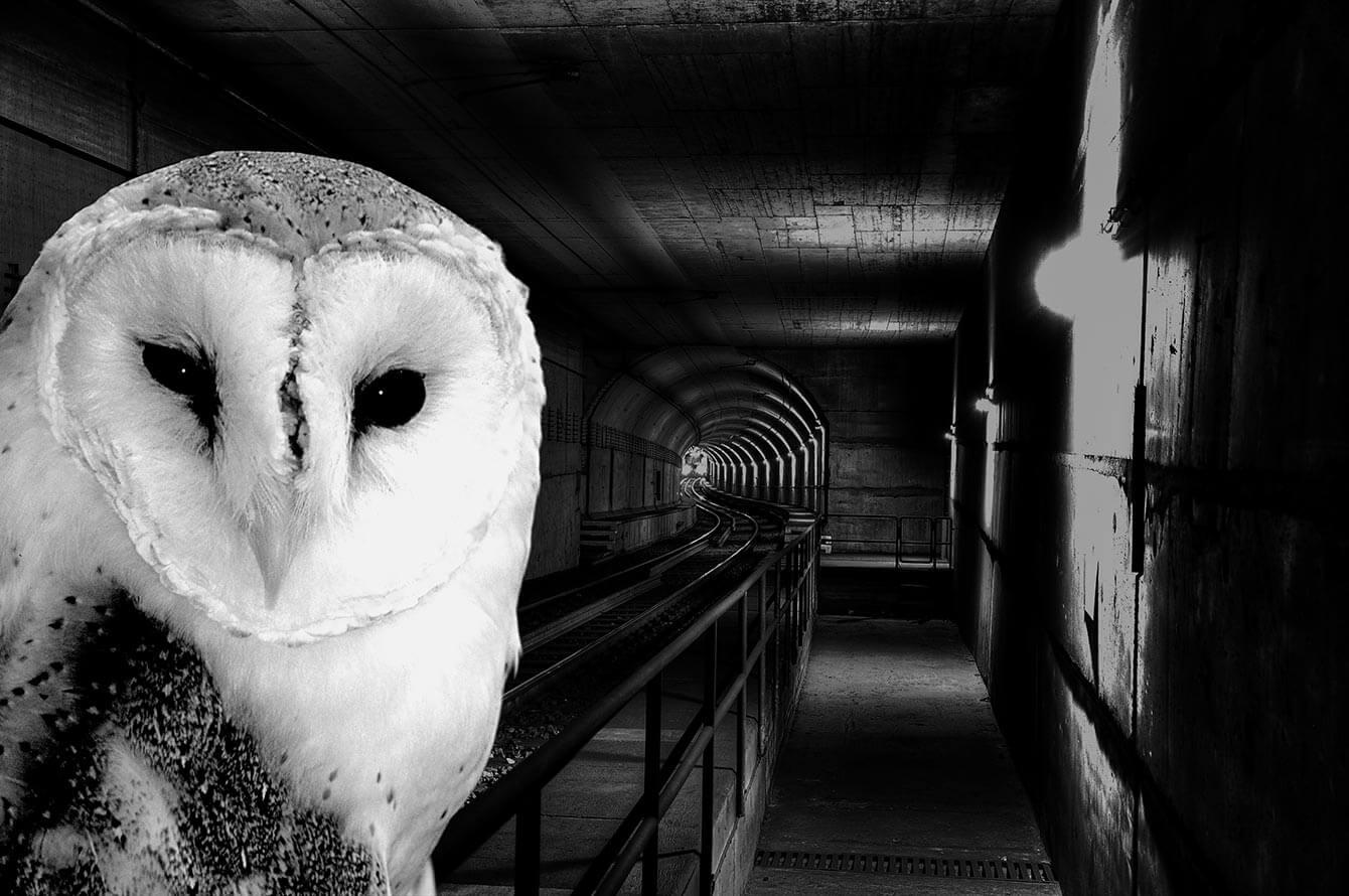 Schwarz-weiß Bild eines U-Bahn Tunnels und links im Bild ein Portrait einer Eule